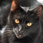 Burg Hiroshima