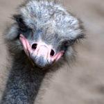 Kenotaph (Scheingrab) im Friedenspark von Hiroshima