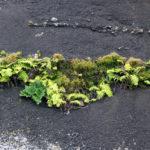 Vegetation in Pico das Aguas