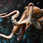 Blick auf Lagoa Verde und Lagoa Azul